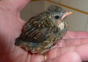 Sauver Un Oiseau Recueillir Un Oiseau Soigner Un Oiseau Ramasser